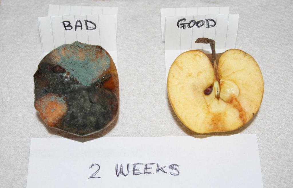 Adrian-Charles-apples-2-weeks-1024x683